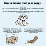 How to house break your pup