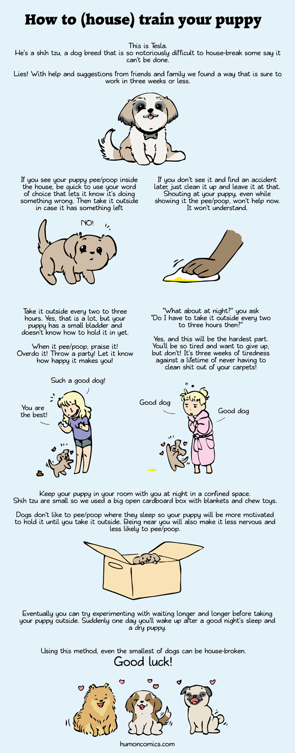 How to house break your pup HumonComics.com